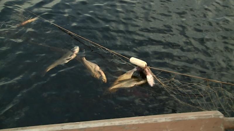 Порядок осуществления рыболовства в учебных и культурно-просветительских целях устанавливается федеральным органом исполнительной власти в области рыболовства.