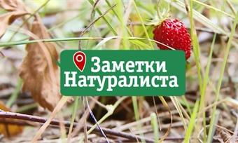 Заметки натуралиста 17.04.18